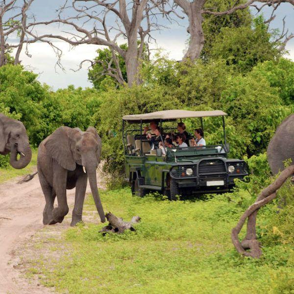 Zuid-Afrika-Olifanten