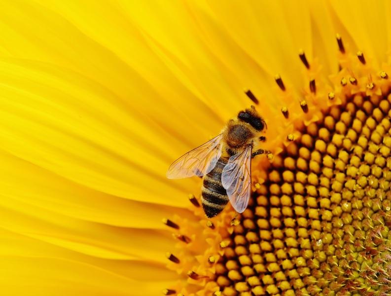 Bijen weten van niets